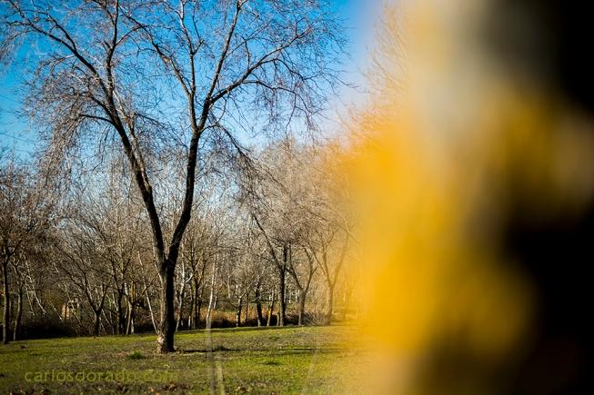 Visita todas mis fotos en la Web: http://carlosdorado.com Web para aprender cosas interesantes de Fotografía de la Naturaleza: https://fotografiacarlosdorado.wordpress.com/ Facebook de Fotografía de la Naturaleza: https://www.facebook.com/fotografiadelanaturalezadecarlosdorado Vídeos de formación en Fotografía de Naturaleza: http://www.youtube.com/user/CarlosDoradoVideo